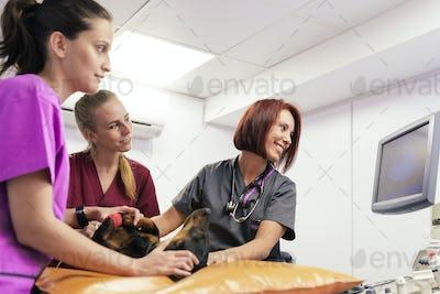 Veterinary team doctors working.
