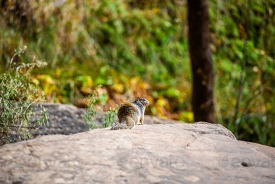 Squirrel portrait on a rock in nature