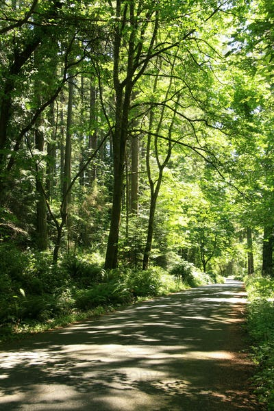 Forest Surrounding Hatley Castle, Victoria, BC, Canada
