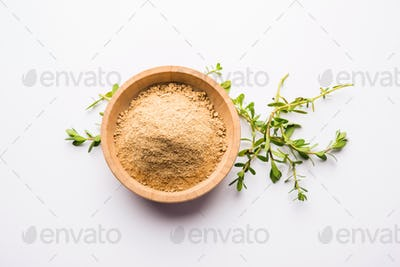 Bacopa monnieri herb plant or Ayurvedic Brahmi plan