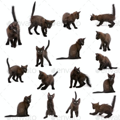 Group of black kittens in front of white background