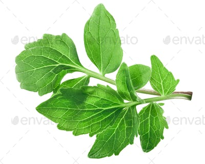 Valerian leaves v.officinalis, paths