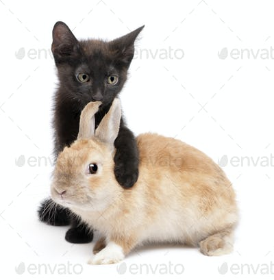 Black kitten with paw around rabbit in front of white background