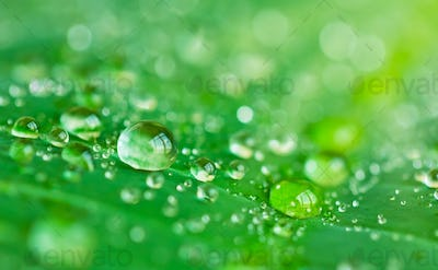 Water drops close up