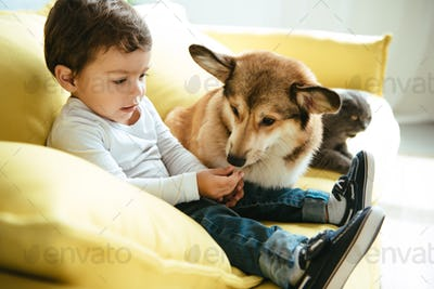 Adorable Boy Sitting on Sofa With Cat and Dog