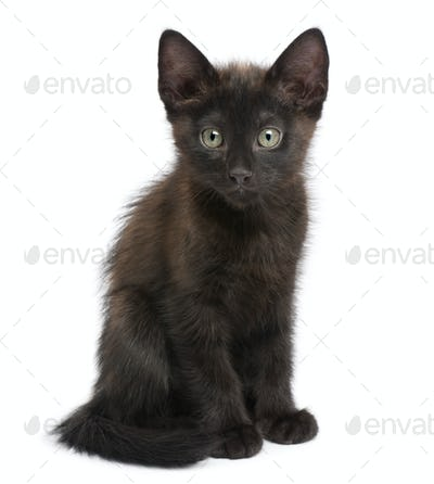 Portrait of black kitten in front of white background