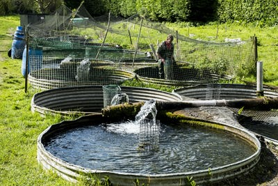 High angle view of man wearing waders working at a water tank at a fish farm raising trout.