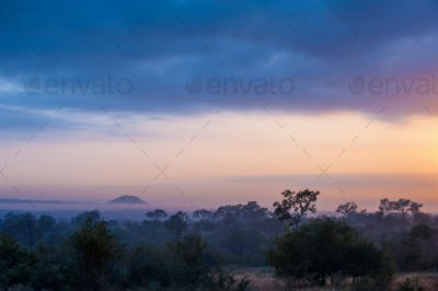 A landscape, dark trees and bushes in foreground, silhoutte of mountains with mist in the