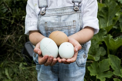 Close up of girl standing outdoor, holding three freshly laid eggs in her hands.
