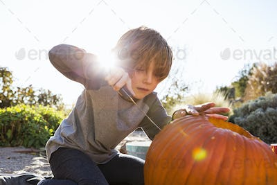 A six year old boy carving a pumpkin at Halloween.