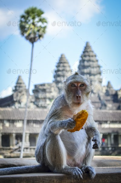 Ankor Wat, a 12th century historic Khmer temple and UNESCO world heritage site. Monkey sititng on a