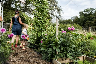 Girl and woman walking through a garden, carrying baskets with pink Dahlias.
