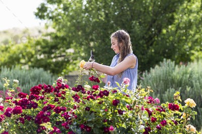 13 year old girl arranging roses from formal garden