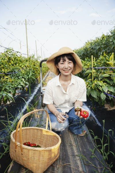 Japanese woman wearing hat kneeling in vegetable field, smiling at camera, basket with fresh