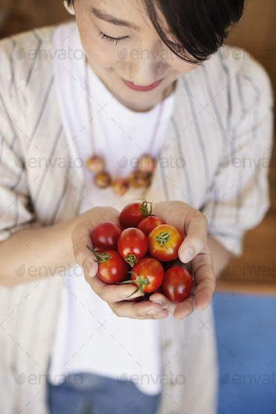 High angle close up of Japanese woman holding freshly picked tomatoes.