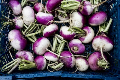 High angle close up of a crate with freshly picked white and purple turnips.