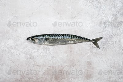 High angle close up of a fresh mackerel fish.