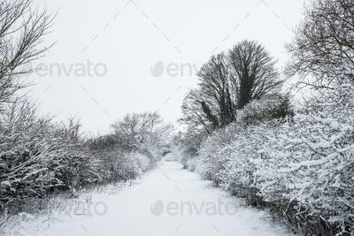 View along a rural road lined with snow-covered trees.