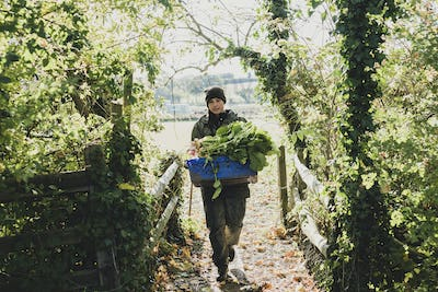 Woman walking towards camera, carrying blue crate with freshly harvested vegetables.