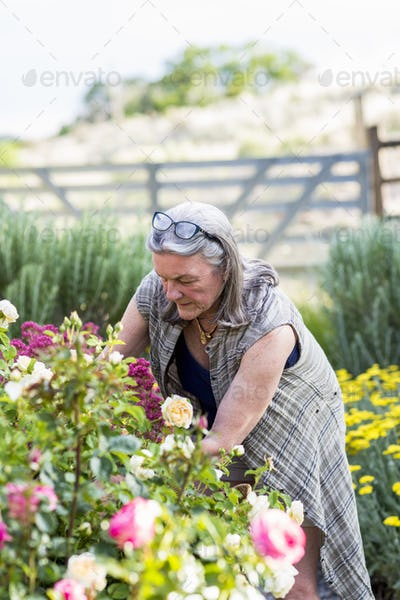 senior grandmother and her 5 year old grandson pruning roses in her garden