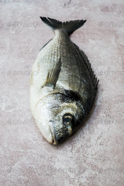 High angle close up of a fresh sea bream.