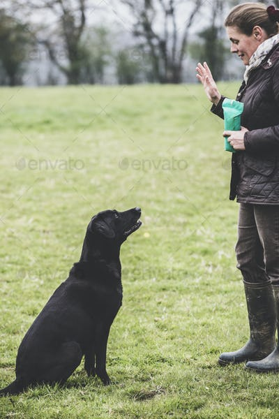 Woman standing outdoors in a field, a dog trainer giving hand command to Black Labrador dog.