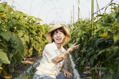 Japanese woman wearing hat standing in vegetable field, picking fresh peppers, smiling at camera.