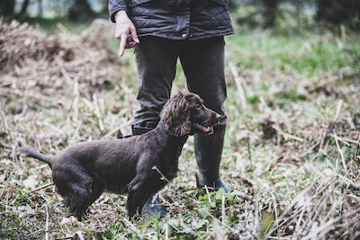 Person standing outdoors, pointing at Brown Spaniel dog.