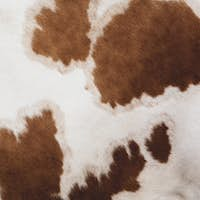 Close up of hide of a piebald red and white Guernsey cow.