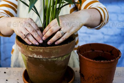 High angle close up of person re-potting plant into a terracotta pot.