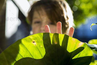 hands of 6 year old boy casting shadow on plant