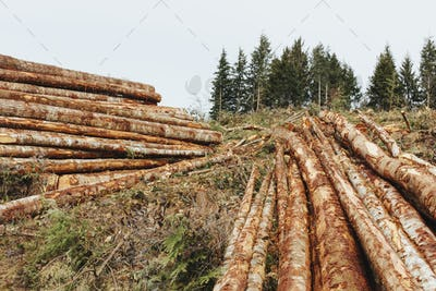 Stacked logs from clearcutting in the Pacific Northwest, Washington