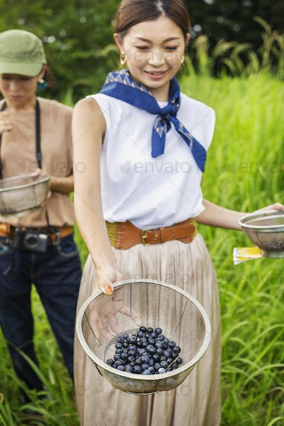 Two Japanese woman picking berries in a field.