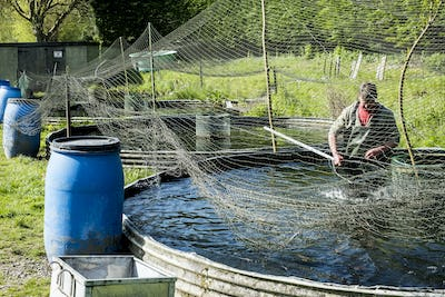 High angle view of man wearing waders working at a water tank at a fish farm raising trout., holding