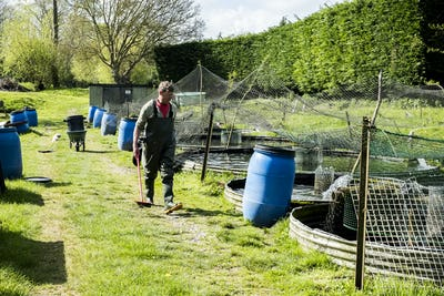Man wearing waders walking past water tanks at a fish farm raising trout.