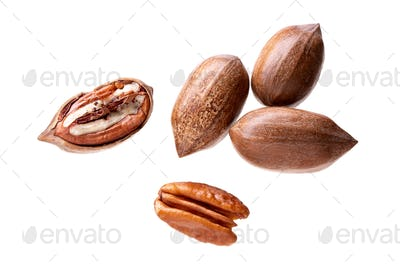 Pecan nuts isolated