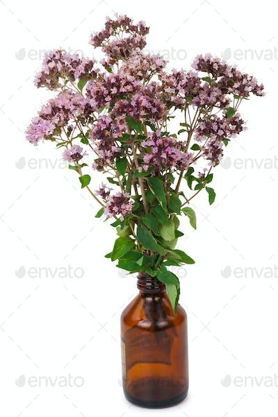 Oregano flowers with pharmaceutical bottle