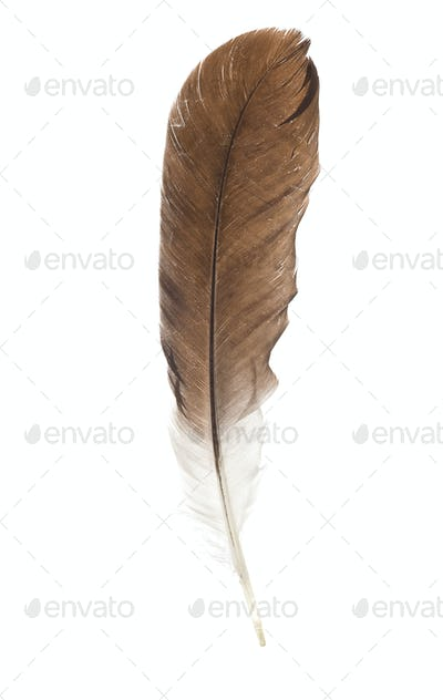 feather pen isolated on white