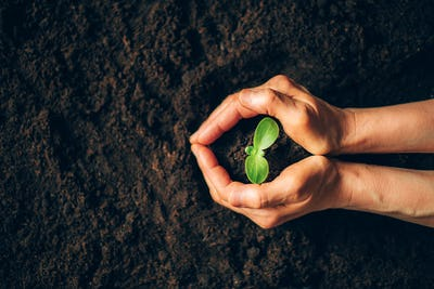 Farmer hand holding young plant. Top view. Banner. New life, eco, sustainable living, zero waste