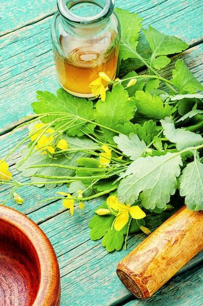 Celandine in herbal medicine