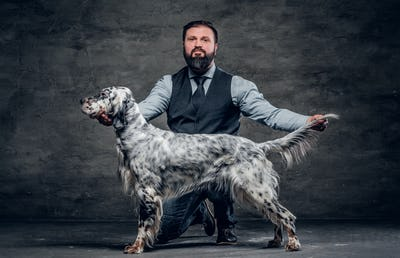 Bearded male wearing elegant clothes with his two purebred Setter dogs