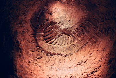 Skeleton of an ancient Scolopendra found during underground excavations