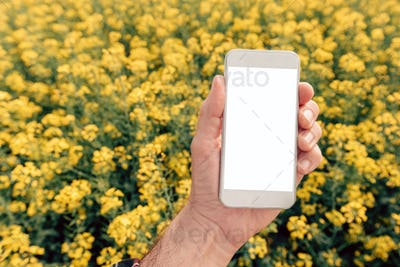Agronomist with smartphone mock up screen in oilseed rape field