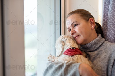 Portrait of senior woman sitting by window indoors at home, holding dog