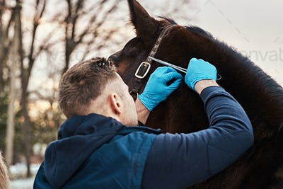 Veterinarian makes an external examination of a horse to find papillomas on a ranch outdoors.