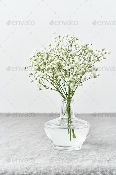 Gypsophila flowers in glass vase. Soft light, Scandinavian minimalism