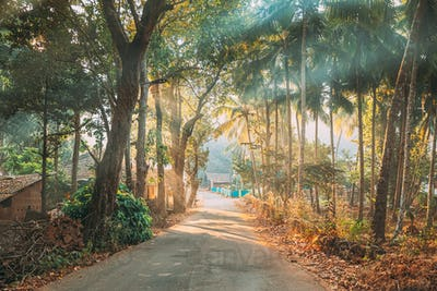 Goa, India. Country Road Through An Indian Village. Morning Dawn Haze Enveloped Palm Trees