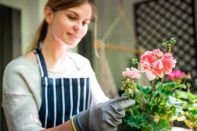Woman putting flowers into the pot on balcony