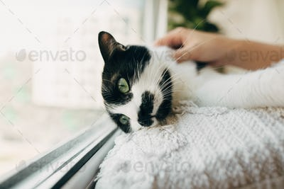 Cute cat with funny look lying on pillow at window