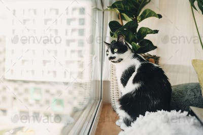Funny cat sitting at window and looking in street